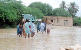 سندھ : شدید بارش، فصلیں تباہ، ہلاکتیں تئیس ہو گئیں
