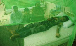 کراچی میں بھی ڈینگی کی پرواز ،مریضوں کی تعداد 164ہوگئی