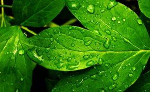 سبز پتوں پہ اٹکی ہوئی شبنم کی طرح