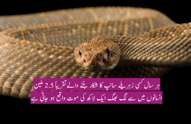 سانپ کا عالمی دن ، سینکڑوں قسم کے سانپوں میں سے چند ہی زہریلے