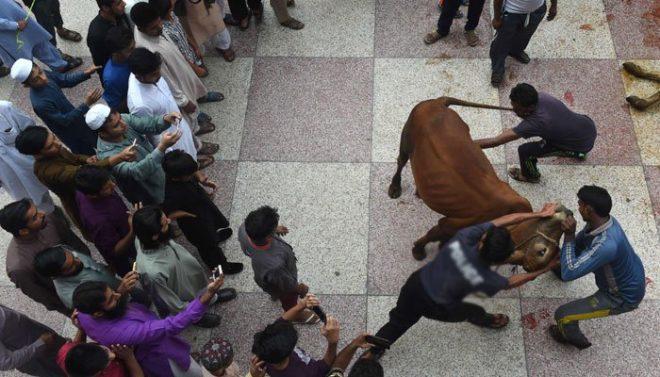 ملک بھر میں عید کے دوسرے روز بھی جانوروں کی قربانی کا سلسلہ جاری