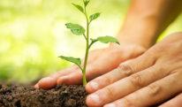 فیس بکی گرین اور کلین مہم  اور خشک گملوں میں سو کھتے اور کملاتے ہوئے پودے