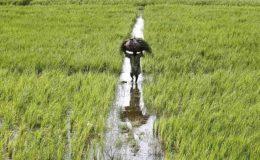زراعت؛ مسلسل مشکلات سے دوچار اہم ترین اقتصادی شعبہ