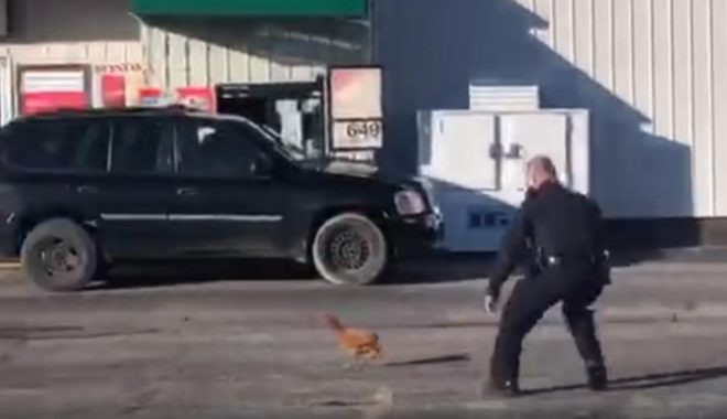 ایک مرغے نے امریکی پولیس اہلکاروں کی دوڑیں لگوا دیں