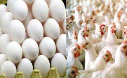 مرغیوں اور انڈوں کی قیمتوں میں اضافہ متوقع ہے، پولٹری ایسوسی ایشن