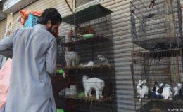 پاکستان لاک ڈاؤن، پنجروں میں بند سینکڑوں جانور ہلاک