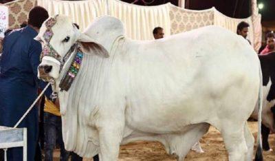 Eid Qurbani