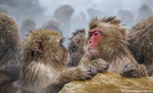 بندروں اور انسانوں کی سوچ میں مطابقت، اب بندر بھی گرامر سیکھ سکتے ہیں
