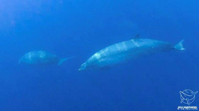 وہیل مچھلی کی نئی قسم دریافت