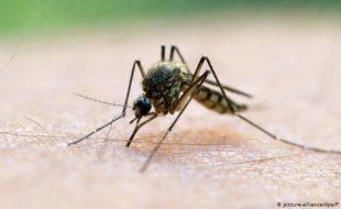 ملیریا کی مؤثر ویکسین تیار کر لی گئی