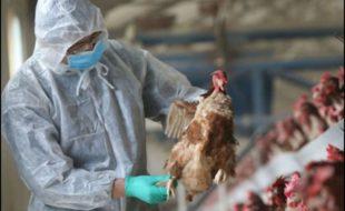 خطرناک برڈ فلو وائرس اگلی عالمی وبا بن سکتا ہے، چینی ماہرین