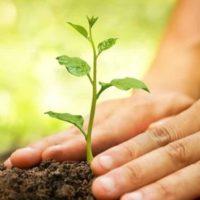 Punjab Green Development Program