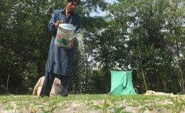 پاکستان کی میزبانی میں ماحولیات کا عالمی دن آج منایا جا رہا ہے
