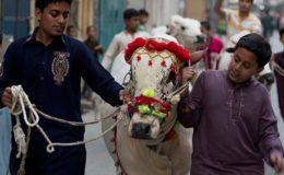 ملک بھر میں آج عید الاضحیٰ مذہبی جوش و جذبے کیساتھ منائی جا رہی ہے