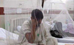 خیبرپختونخوا اور پنجاب میں ڈینگی کے مریضوں میں تیزی سے اضافہ