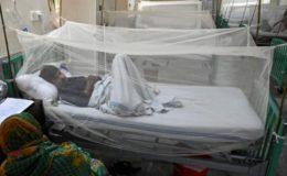 پنجاب اور پختونخوا میں ڈینگی کے مریضوں کی تعداد میں مسلسل اضافہ
